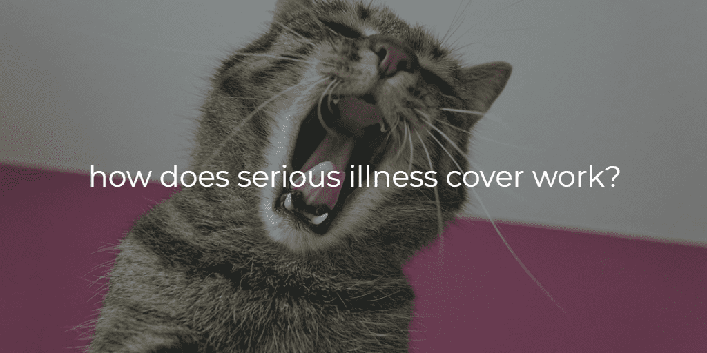 how does serious illness cover work text on image of cat