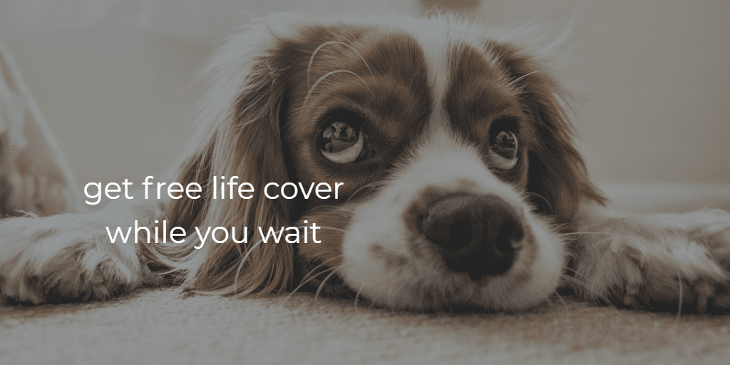 free life cover whole you wait