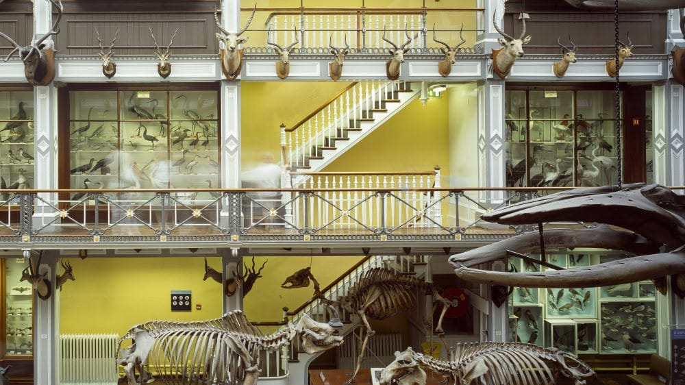 natural history museum - from website
