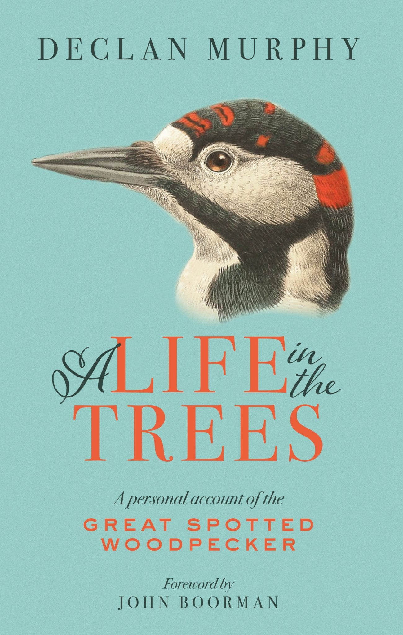 A Life In The Tress The Great Spotted Woodpecker Declan Murphy